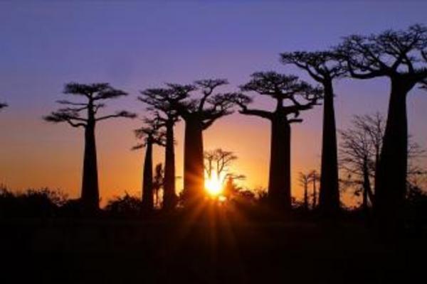 Madagaskar, aleja baobabów