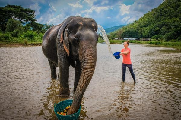 Azyl dla Słoni w Tajlandii